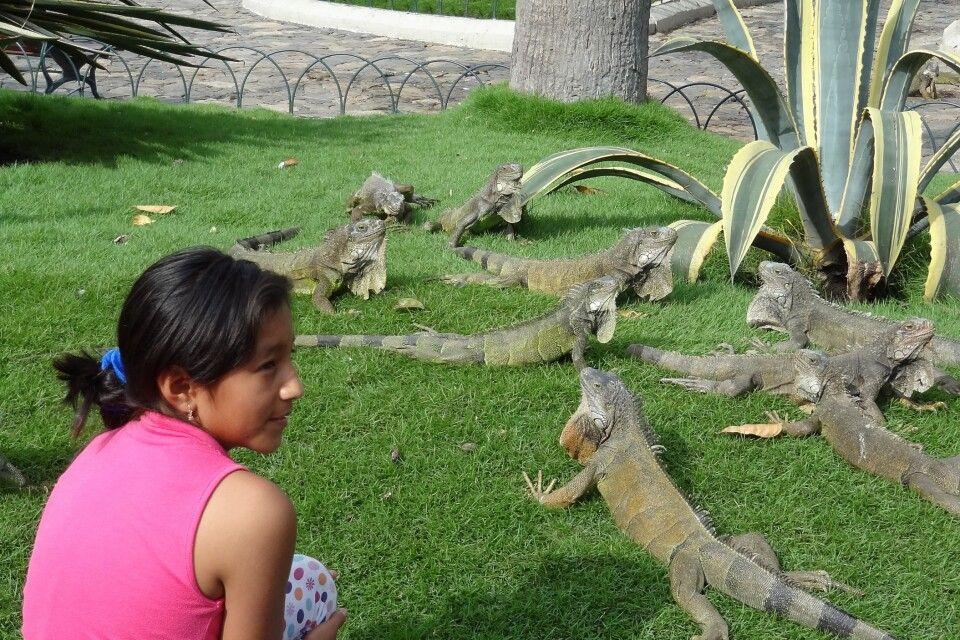 Stadtpark in Guayaquil mit Leguanen