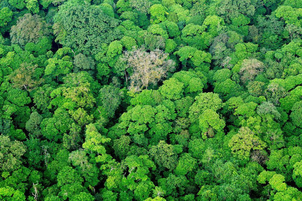 Über den Dächern des Dschungels