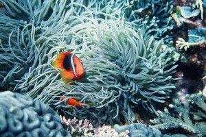 Meeresboden bei Okinawa