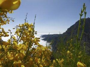 Ginster im Gebirge