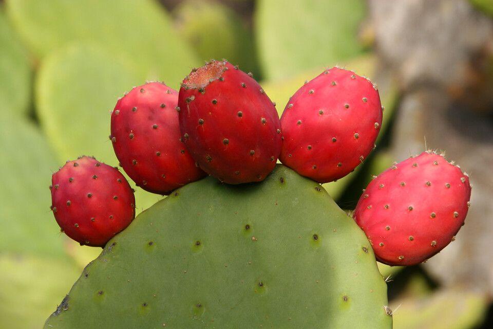 Kaktusdetail