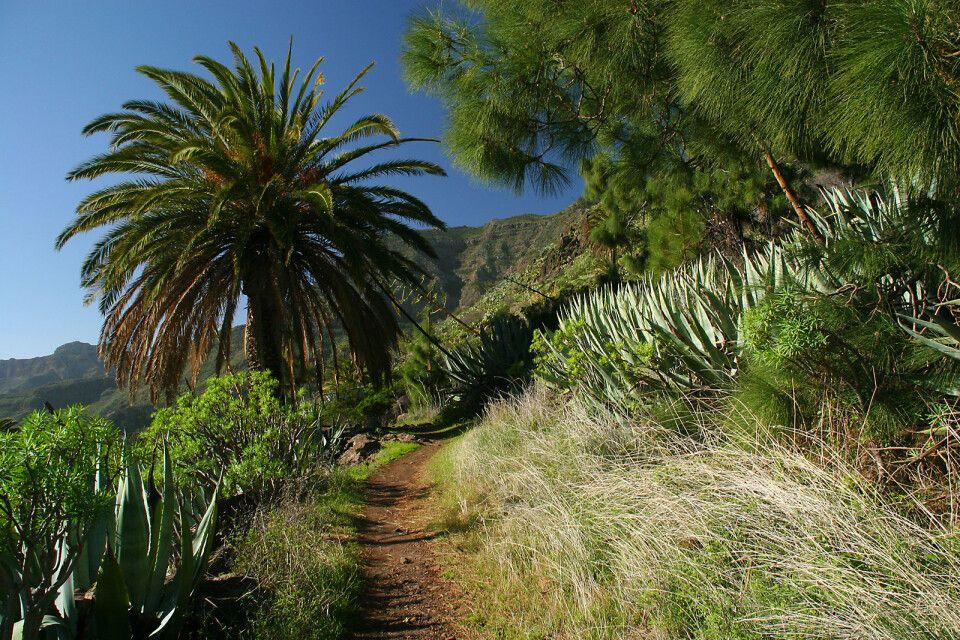 Wanderweg durch Palmen