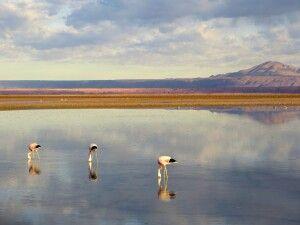 Flamingos im Salar de Atacama