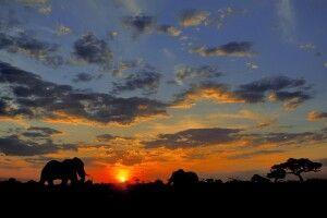 Elefanten im Caprivistreifen