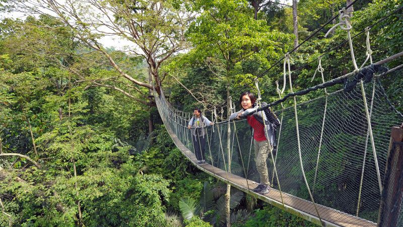 Canopy Walk © Diamir