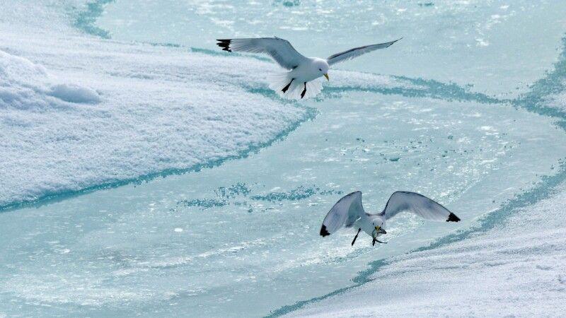 Kampf Um Den Fisch © Diamir