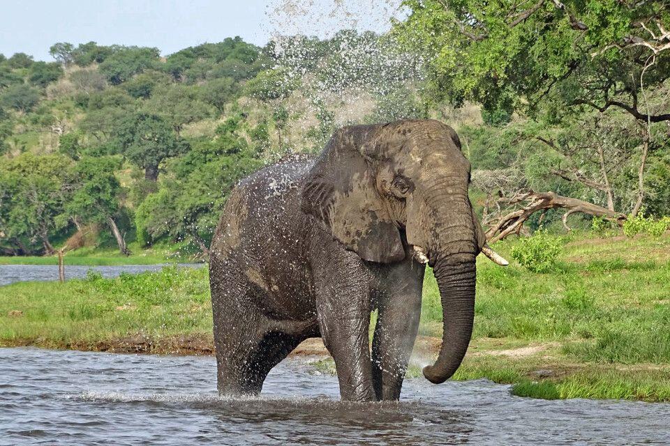 Den Elefanten ganz nah im Chobe-Nationalpark