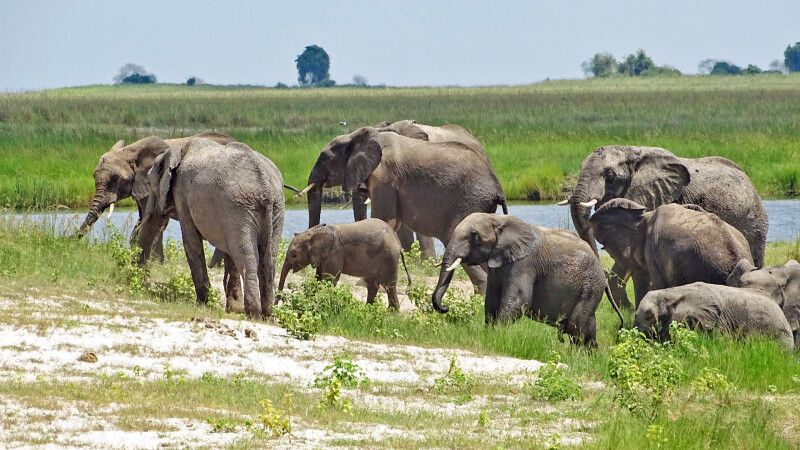 Chobe-National-Park © Diamir