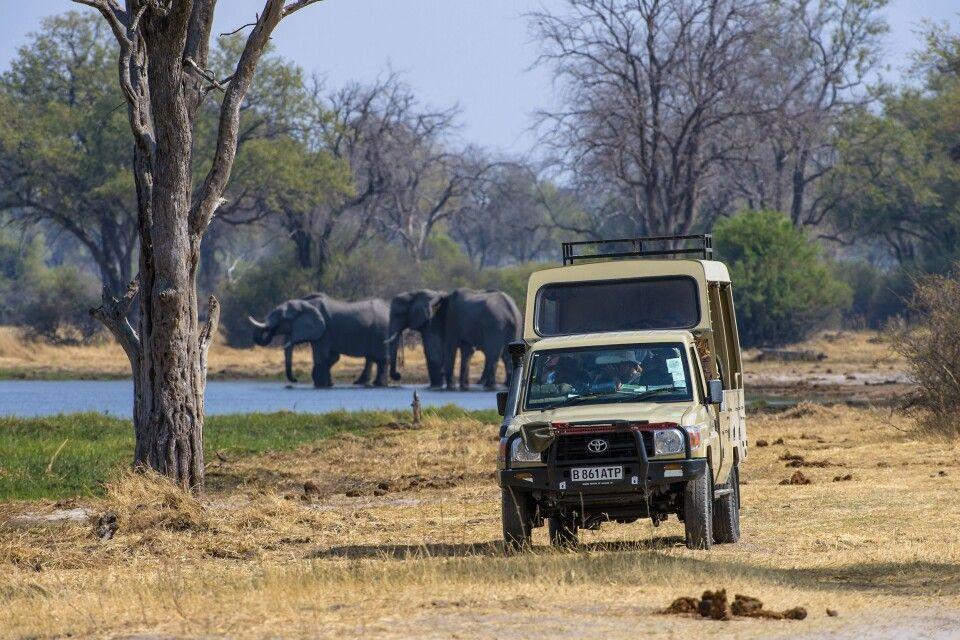 Game Drive im Safarifahrzeug, Moremi Game Reserve