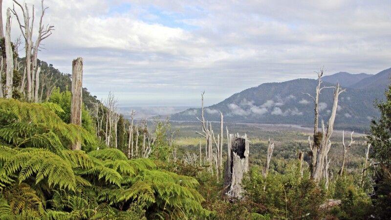 Landschaft nach dem Vulkanausbruch des Chaiten von 2008 © Diamir