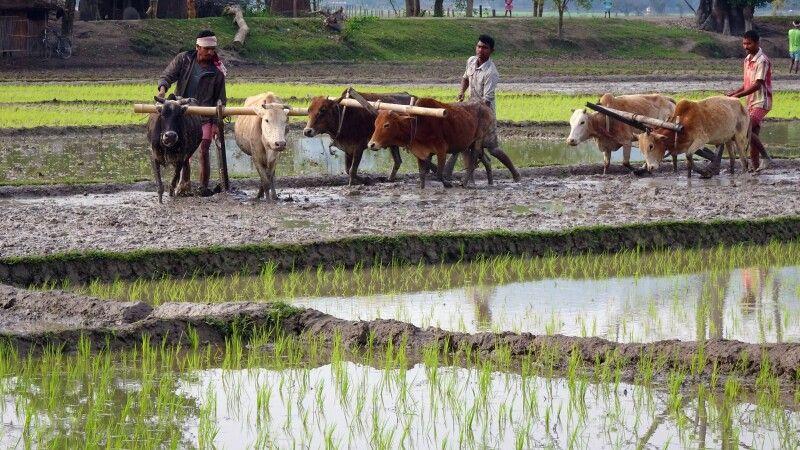 Bauern in Nordostindien © Diamir