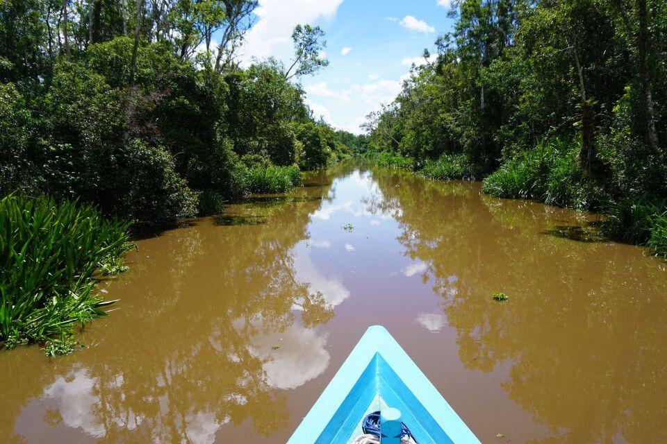 Mit dem Klotok durch den Tanjung Puting NP
