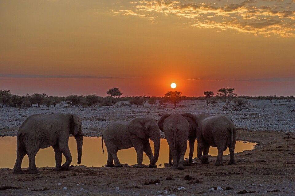 Sonnenuntergang im Etosha-Nationalpark
