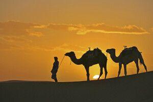 Abendstimmung in der Wüste