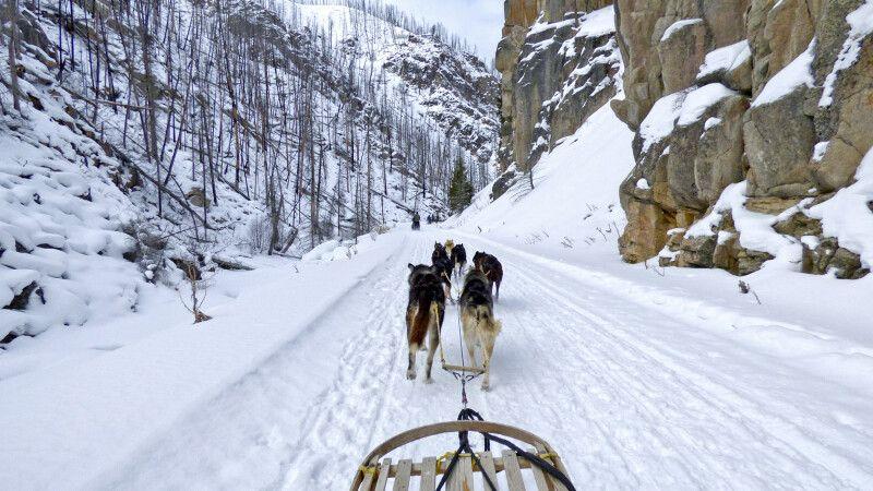 Die verschneite Natur mit dem Hundeschlitten erkunden © Diamir
