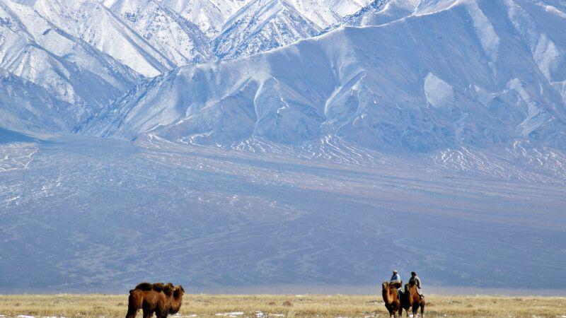 Kamele in der Har-Us-nuur-Ebene © Diamir