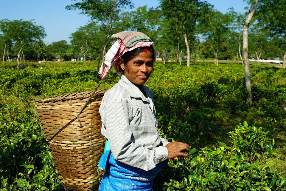 Auf der Teeplantage in Assam – die freundlichen Teeplückerinnen lassen sich über die Schulter schauen