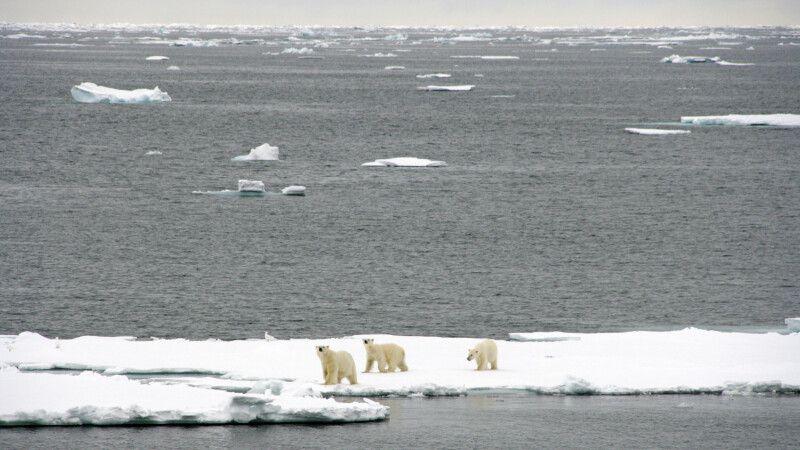 Eisbärmutter mit zwei Jungtieren © Diamir