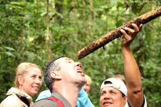 Überlebenstipps im Regenwald