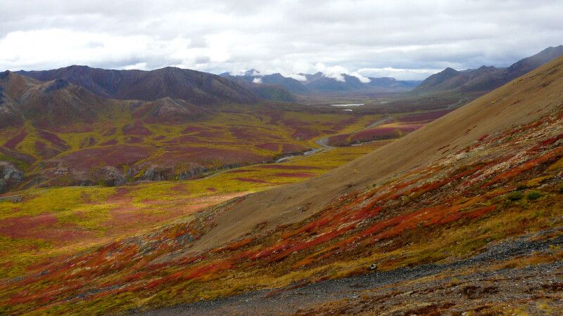 Herbstliche Tundra, Tombstone Mountains, Yukon © Diamir
