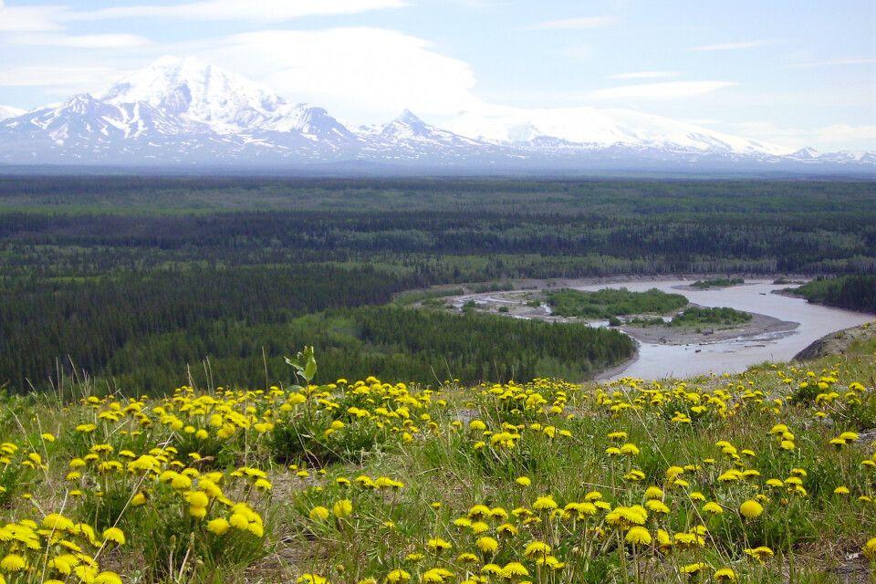 Indian River mit Denali im HIntergrund