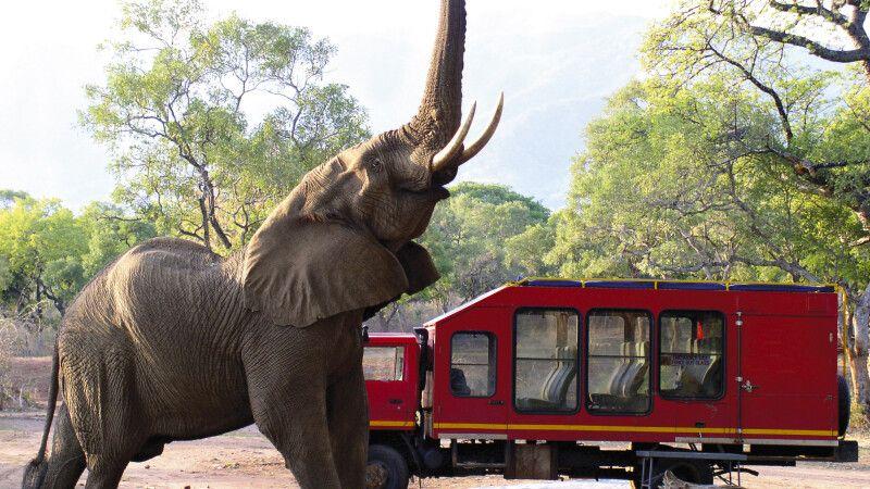 Elefant vor einem Sunway Safaritruck © Diamir