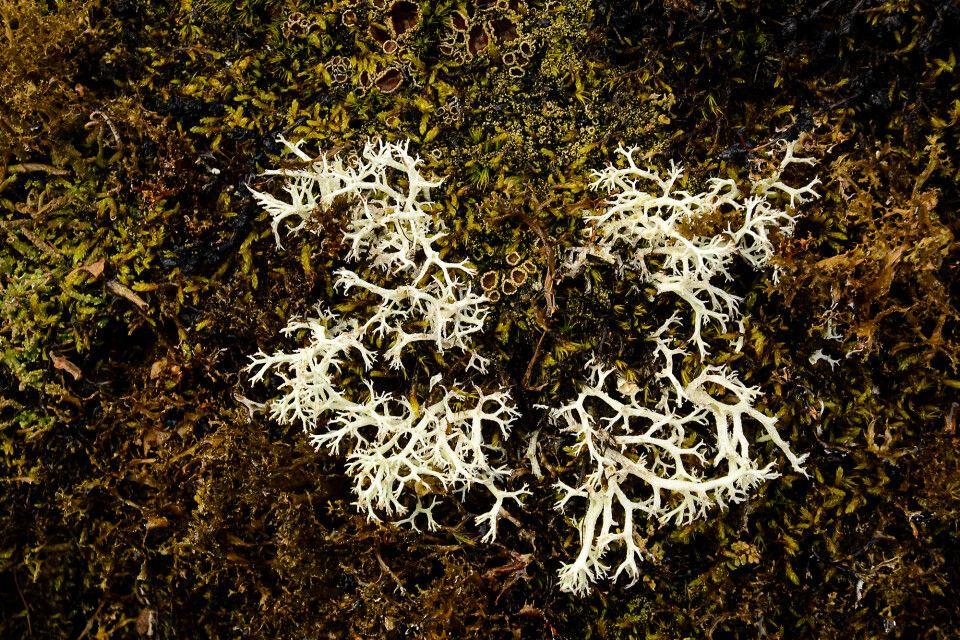 Tundra-Details