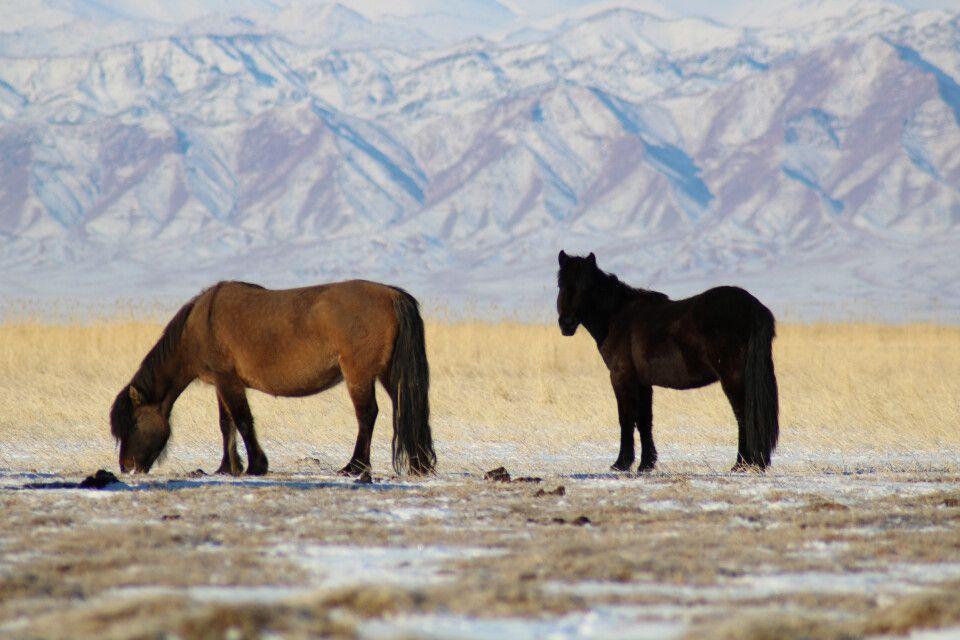 Pferde - so wichtig wie Autos
