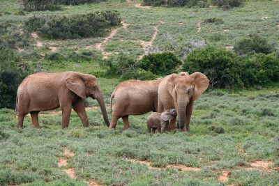 Im Addo-Nationalpark