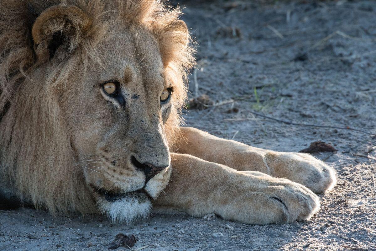 Namibia • Simbabwe – 13 Tage Fotoreise mit Michael Lohmann