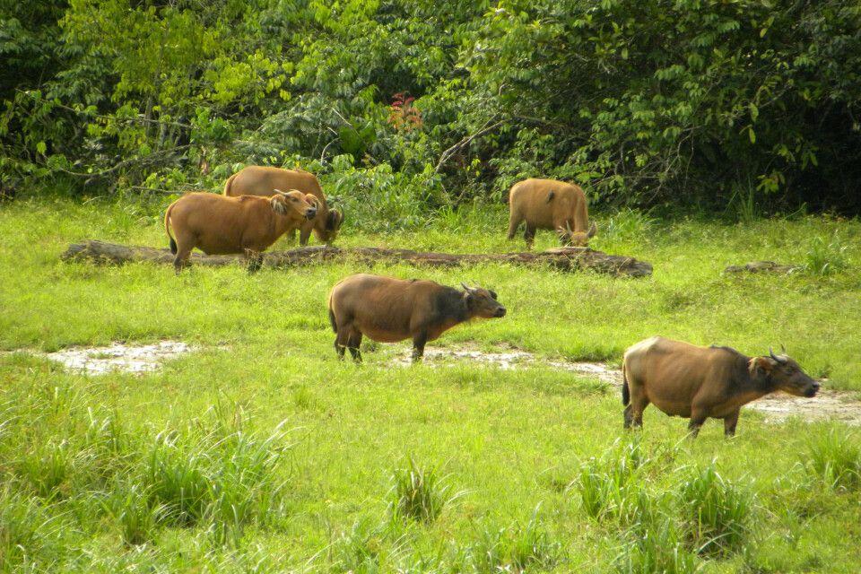 Regenwaldexpedition in Kamerun und Zentralafrika