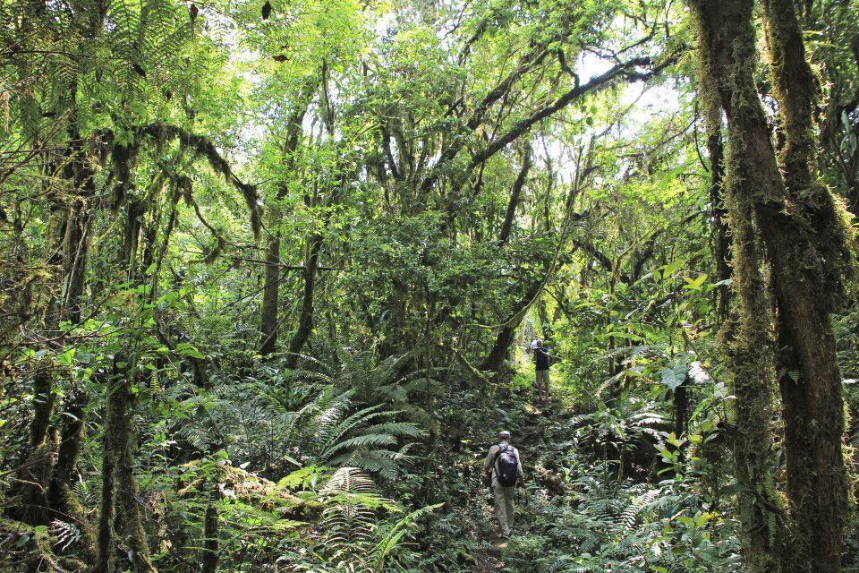 Wanderung durch den Dschungel bei Moka