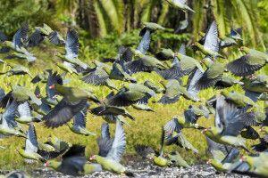 Vogelschwarm im kongolesischen Regenwald