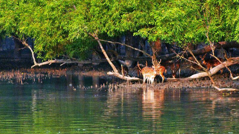 Sundarbans Rehe © Diamir