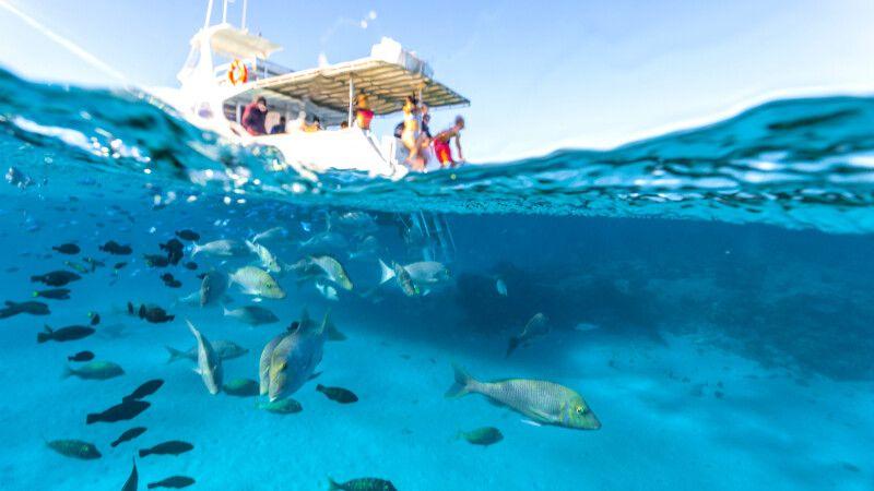 Schwimmen und Schnorcheln in der Coral Bay © Diamir
