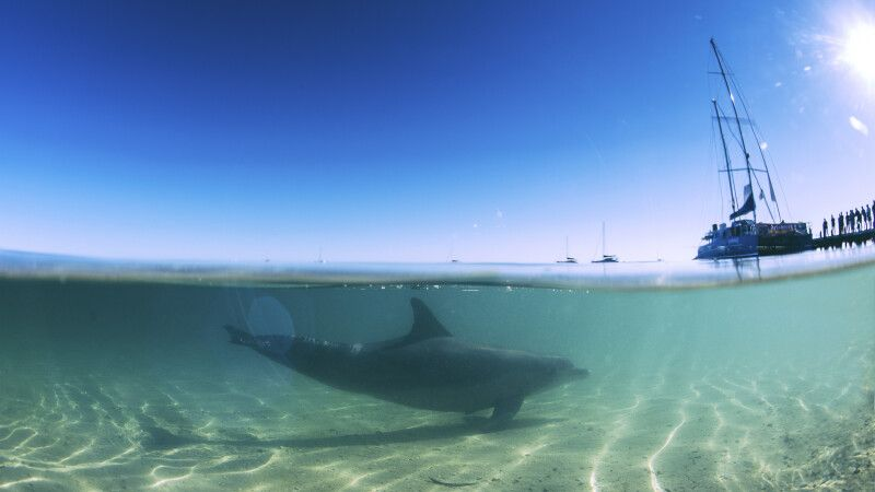 Delfin in Monkey Mia bei Shark Bay © Diamir