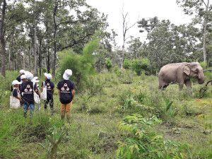 Auf Elefantenpirsch im Yok-Don-Nationalpark