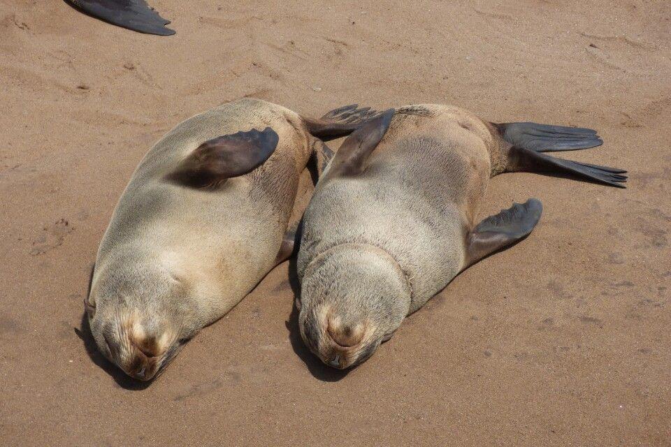 Robbenpaar