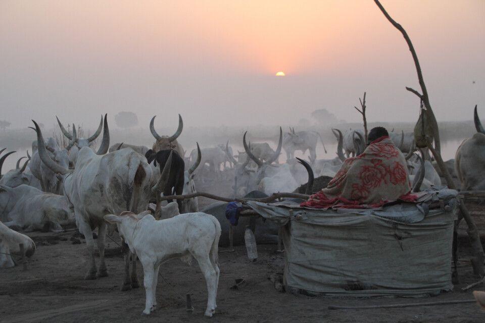 Morgenstimmung im cattle camp