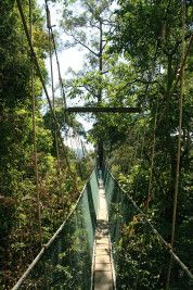 Borneo Rainforest Lodge - Baumkronenpfad (Canopy Walk)