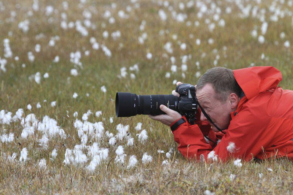 Wollgras ist ein beliebtes Fotomotiv