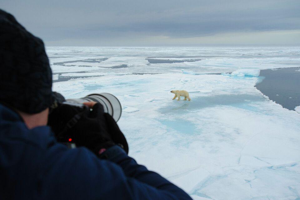 Eisbären - heiß geliebte Fotomotive